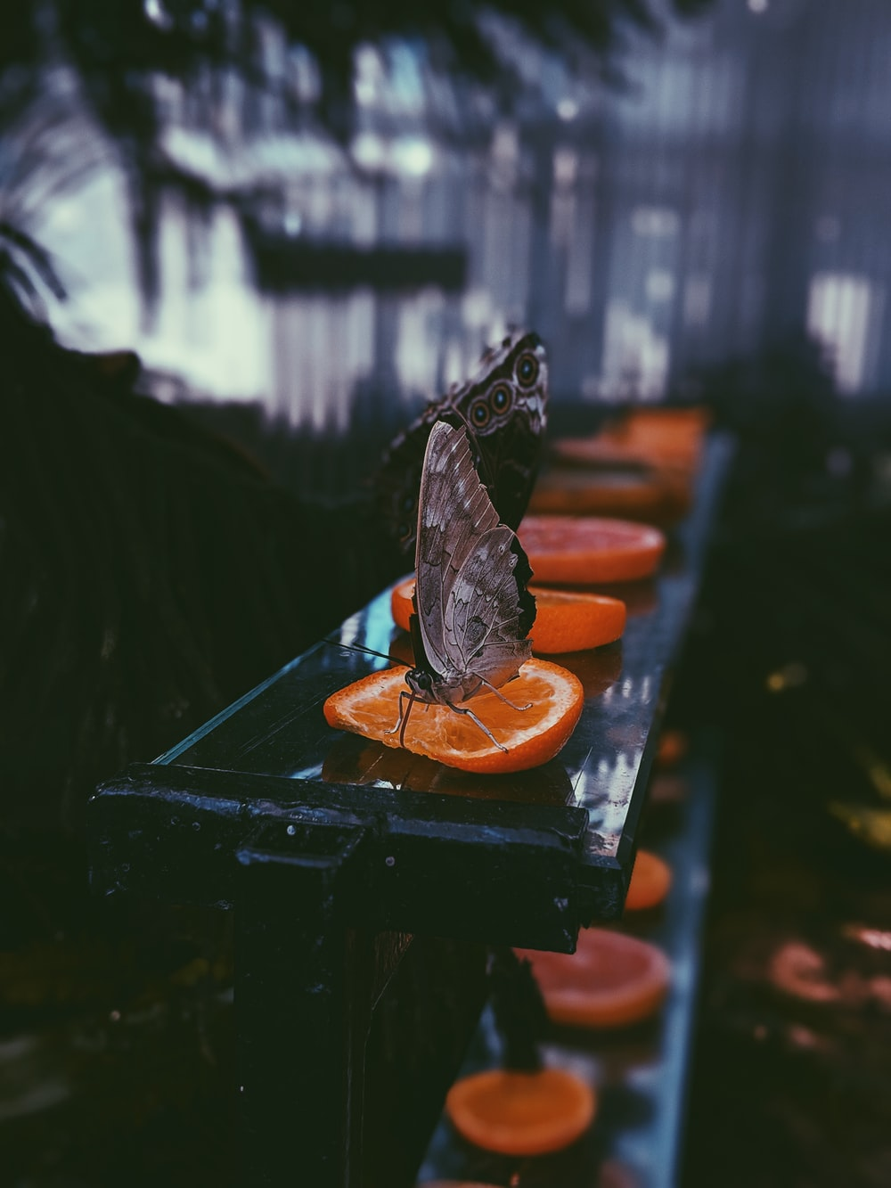 selective focus photography of brown butterfly on sliced orange lime