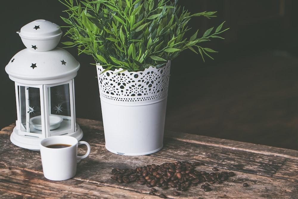 vase of green-leafed plant