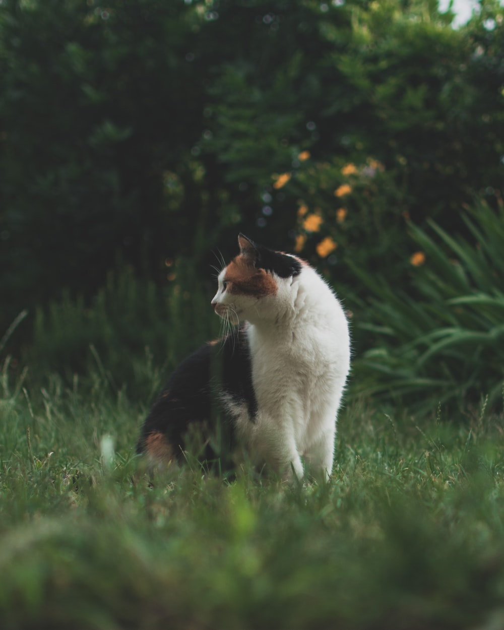 calico cat on green grass