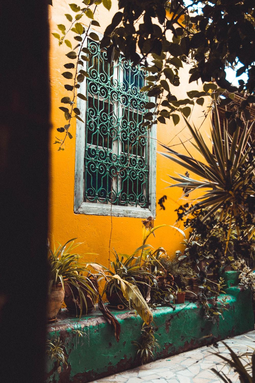 flower pot beside house