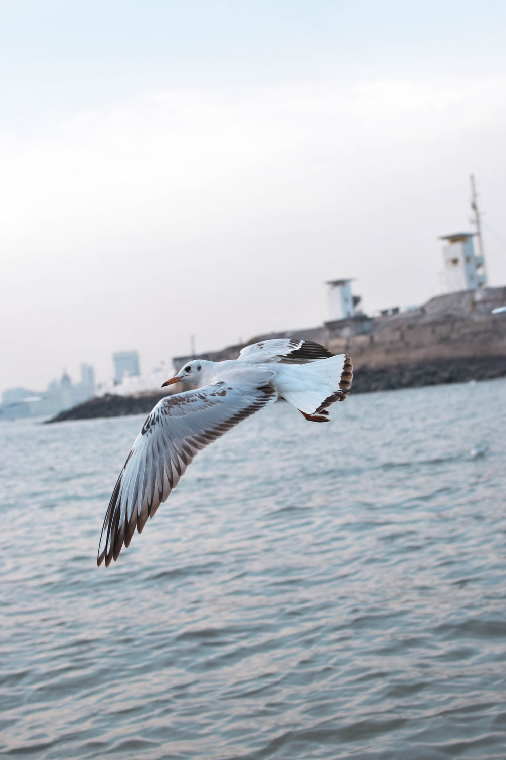 bird on mid air above sea water during daytime