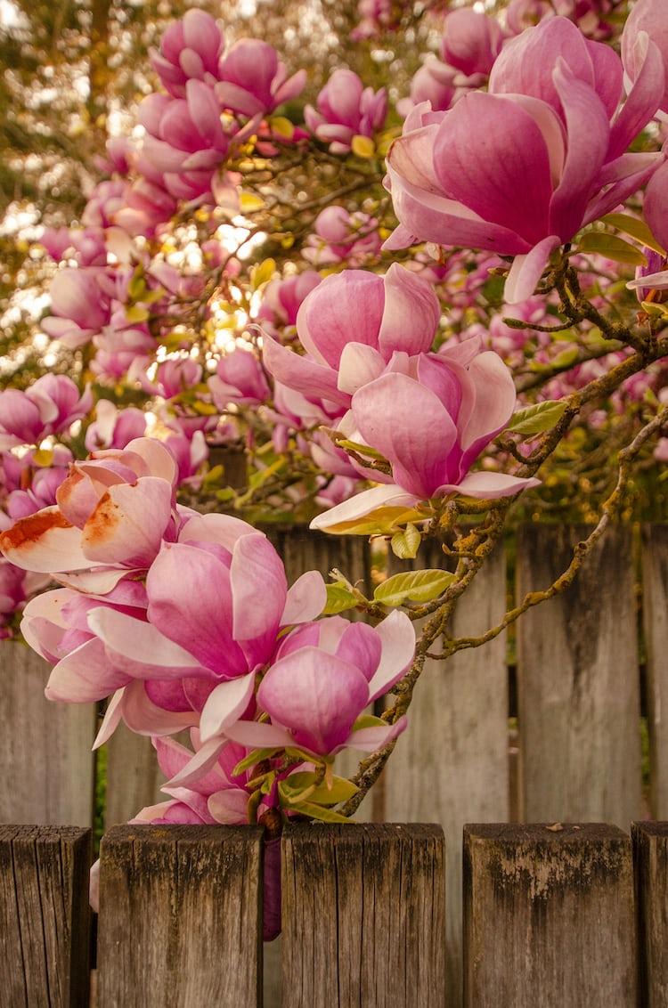 20 Best Free Screensaver, Flower, Floral