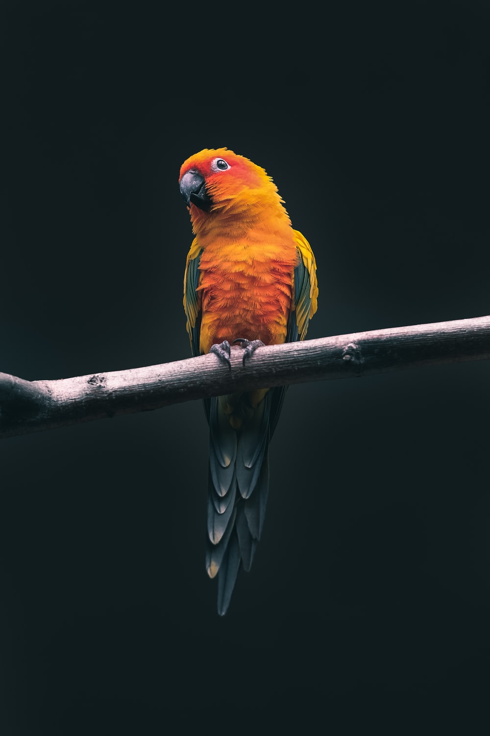 Bird Wallpapers Free Hd Download 500 Hq Unsplash