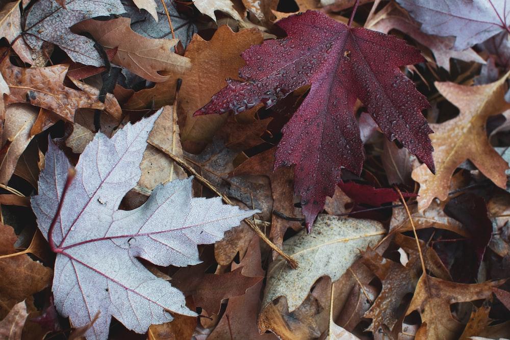 dries leaves