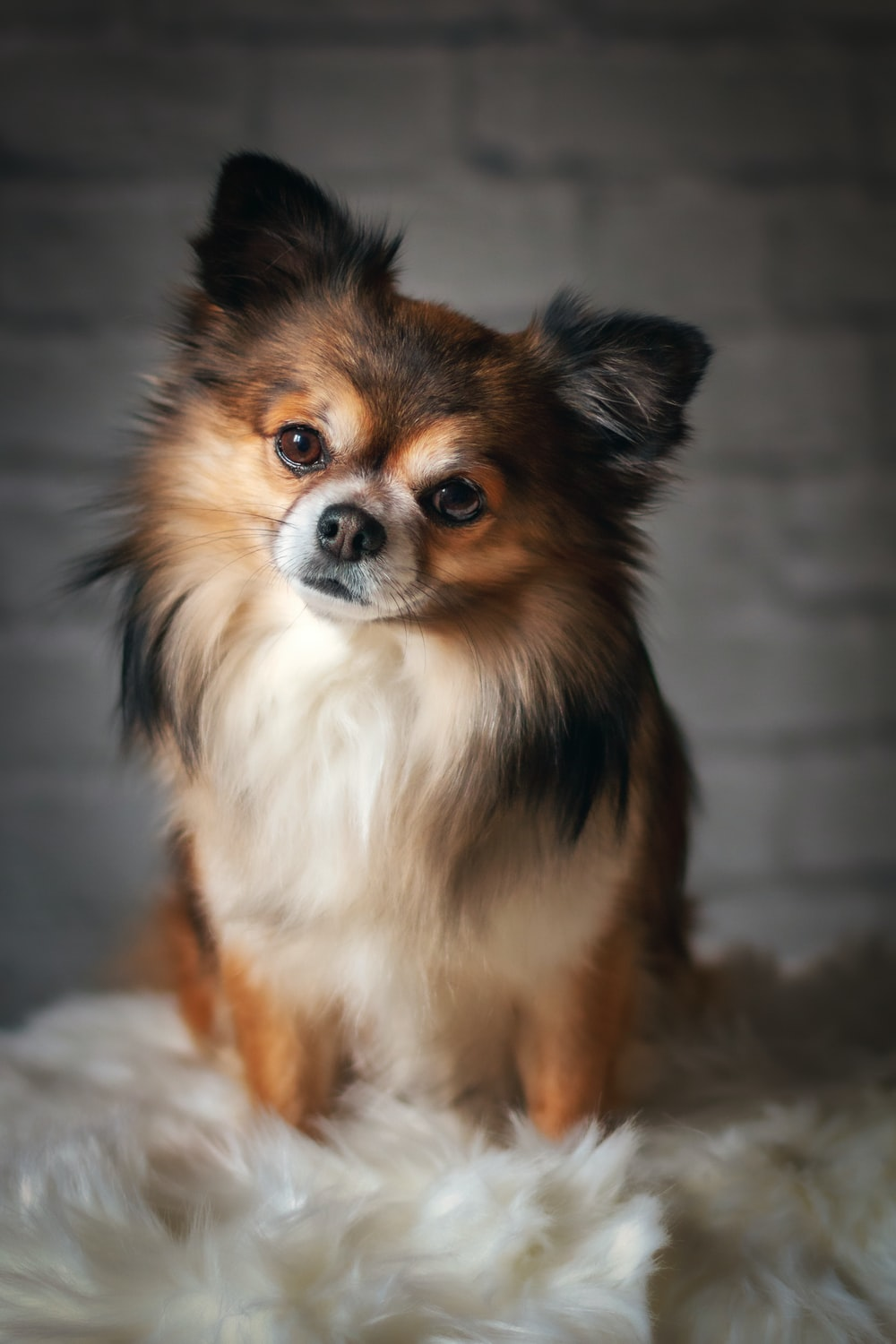 brown long haired dog on white textile
