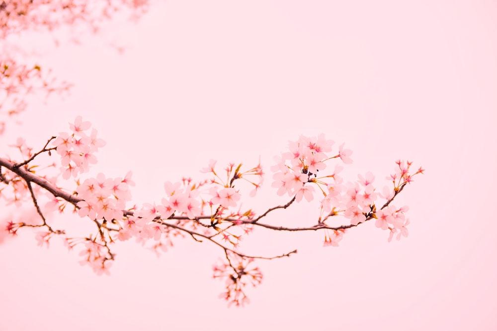 pink flowers at bloom