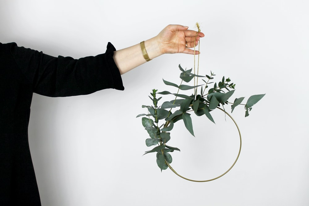 person carrying green leaf plant
