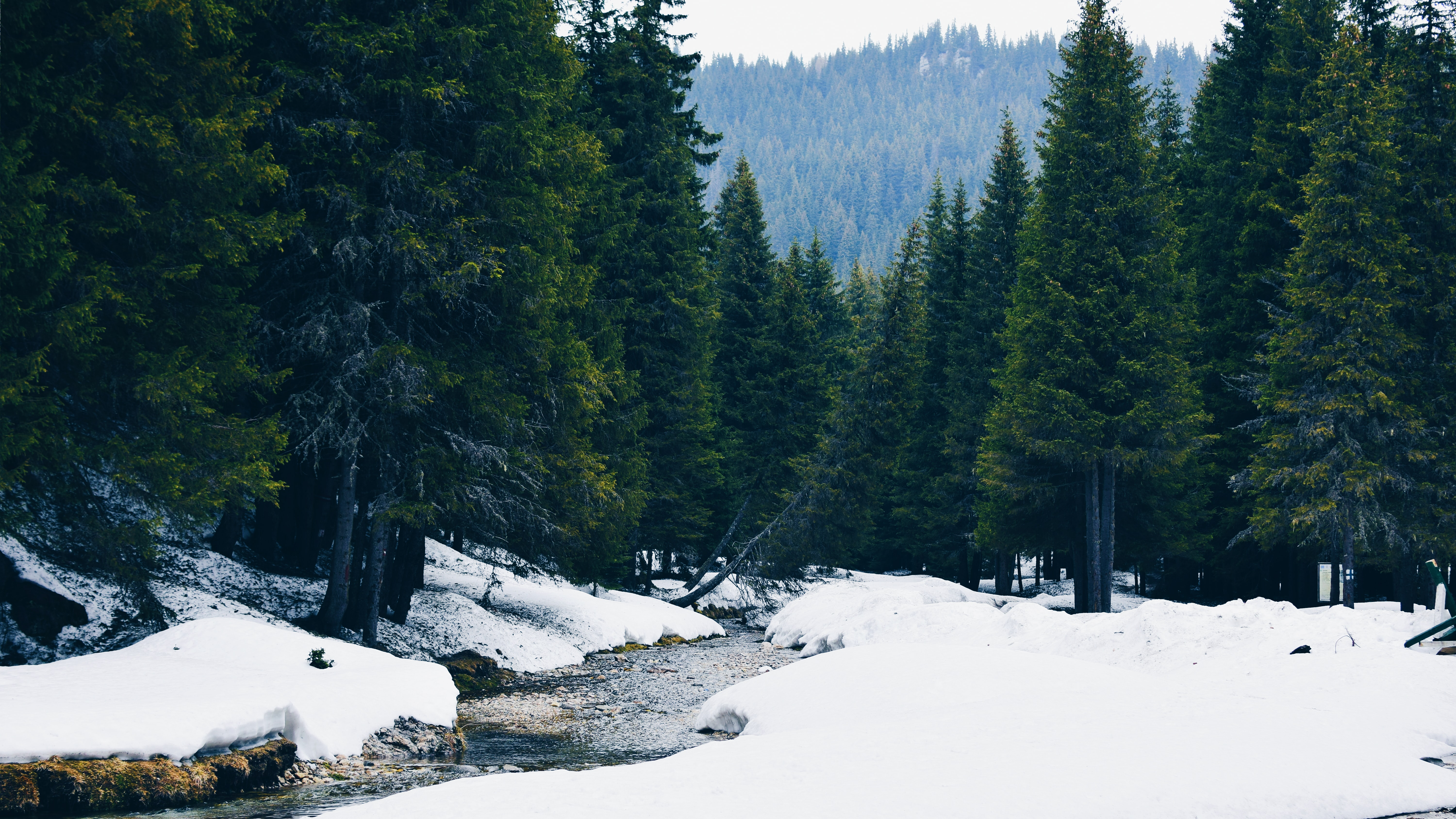 snowy landscape of a forest