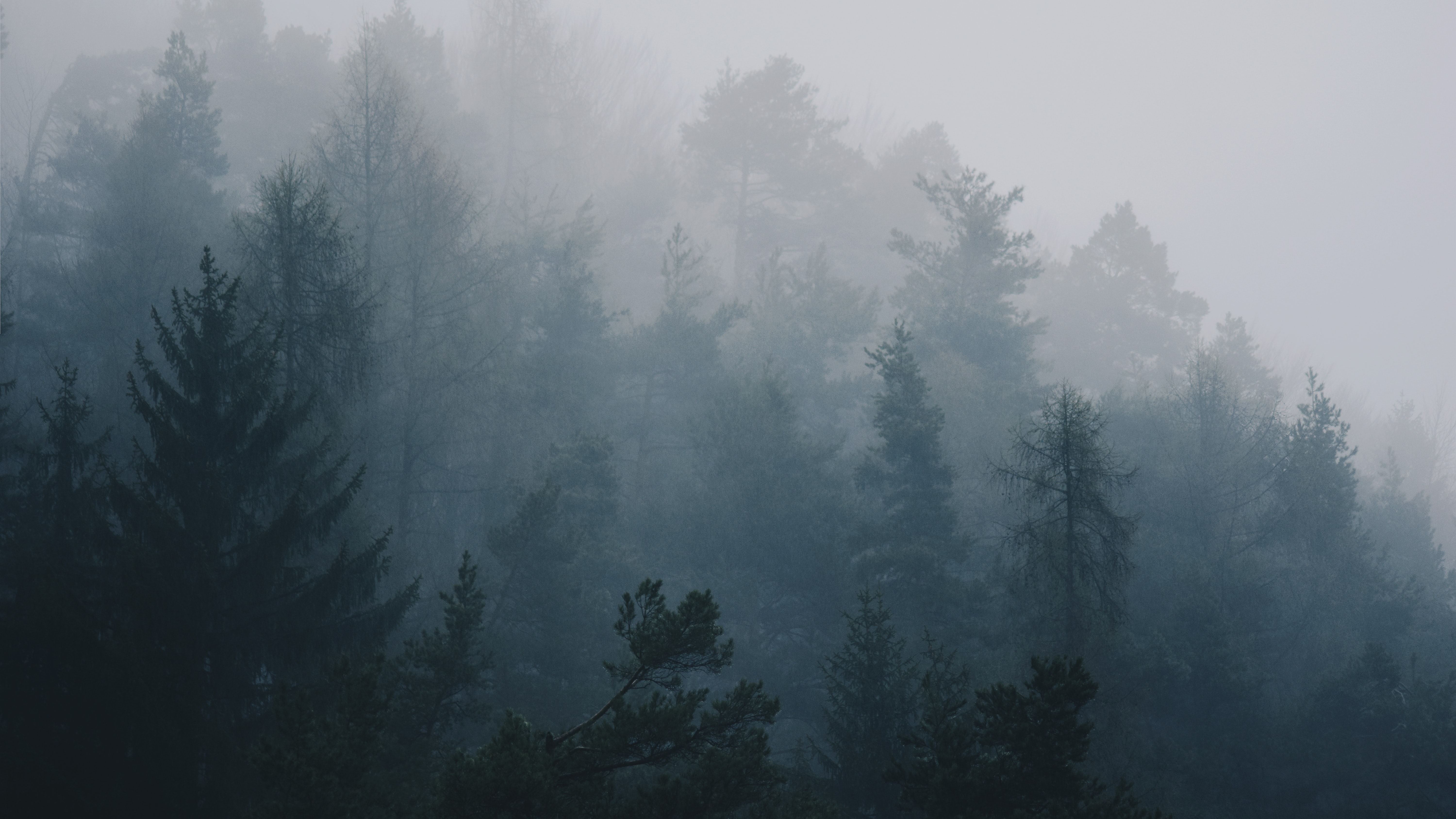 fogs covering trees during daytime