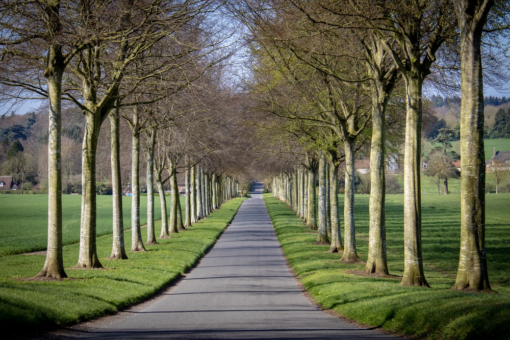 gray concrete road near tall and green trees