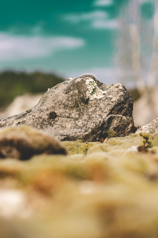 selected focus of gray rock