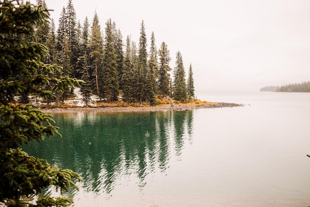 green pine tree near body of water