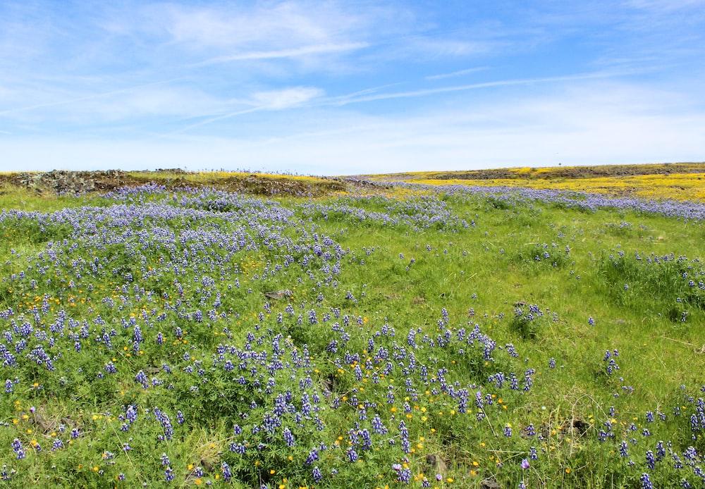 green-grass field