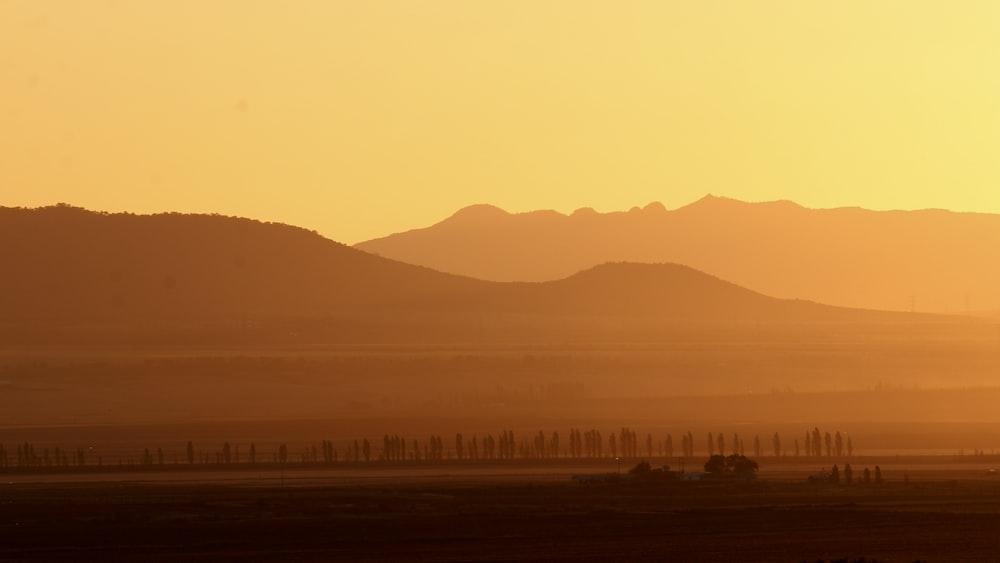 desert during dusk