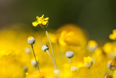 yellow petaled flower photo zoom background