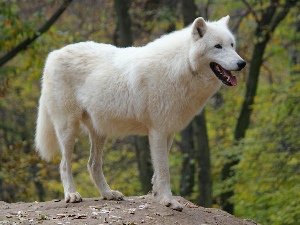 white dog standing on rock during daytime