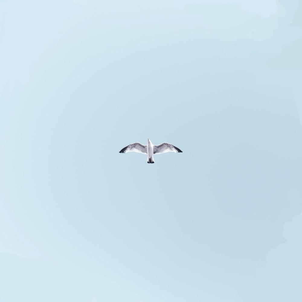 white bird on mid air