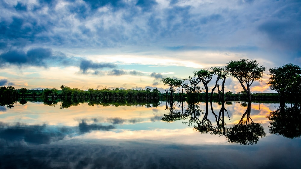 reflection on trees on clear body of water during sunset