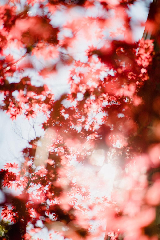 light through pink flowers
