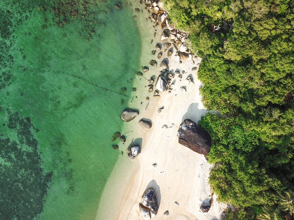 aerial photography of rocks and trees by the shore during daytime