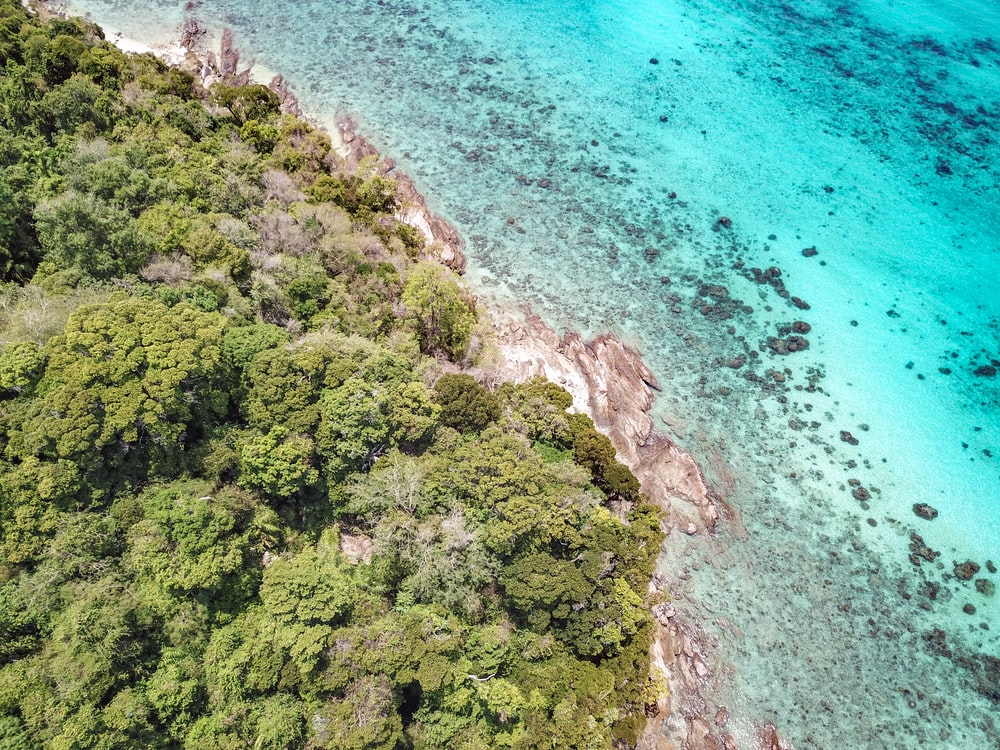 aerial photography of island with trees near ocean