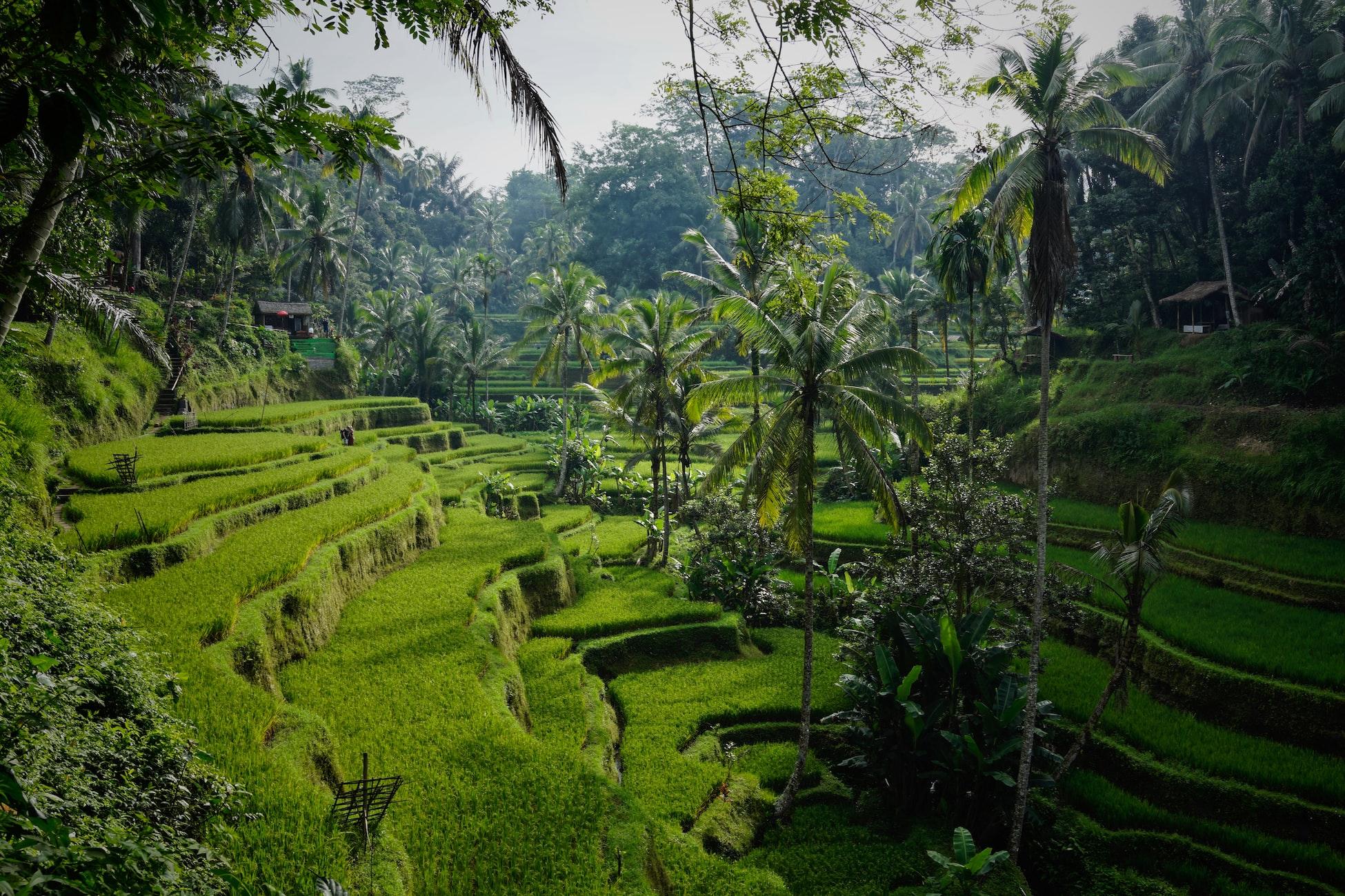 green terraced gardens bali