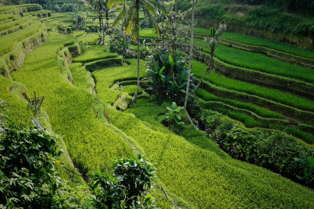 landscape photo of rice terraces