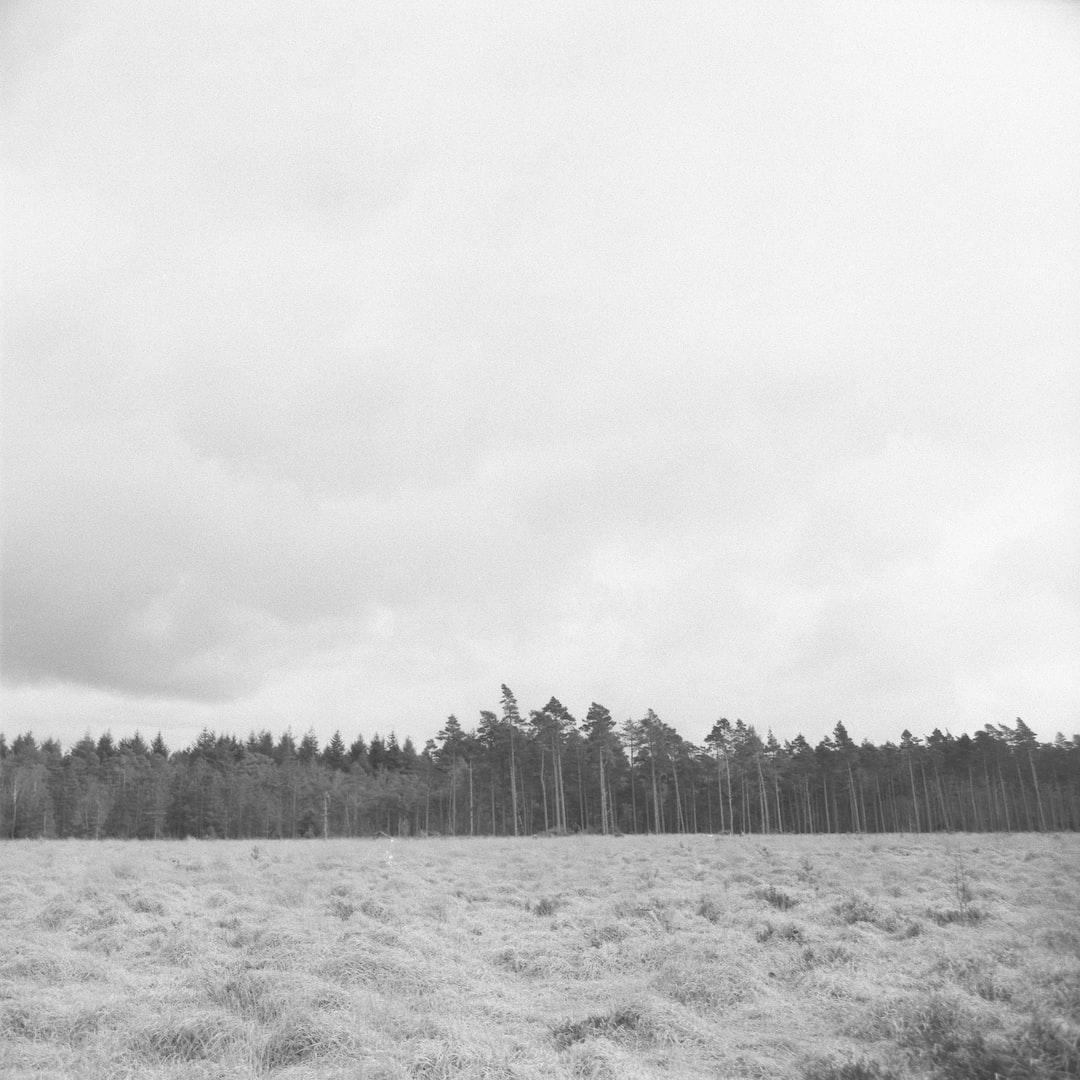 120mm film photo scan