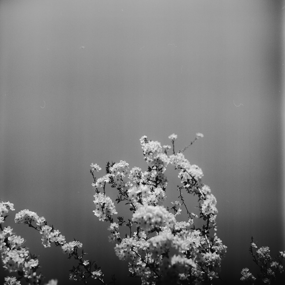 Grayscale photography of petaled flower