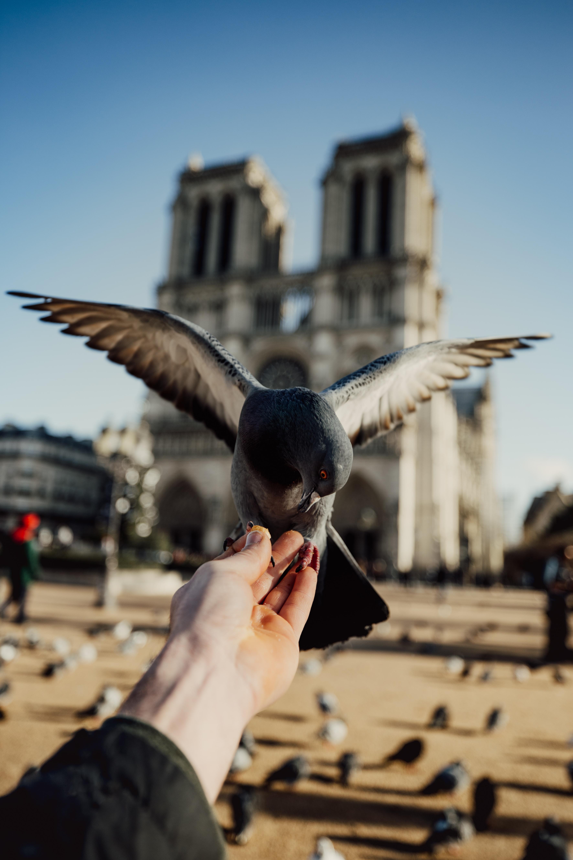 black bird on person's hand