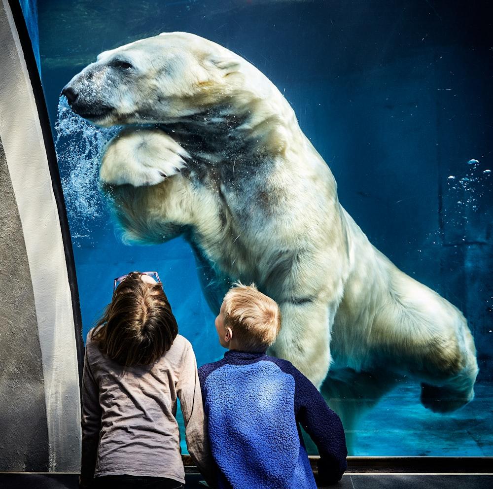 two boys watching on brown white polar bear