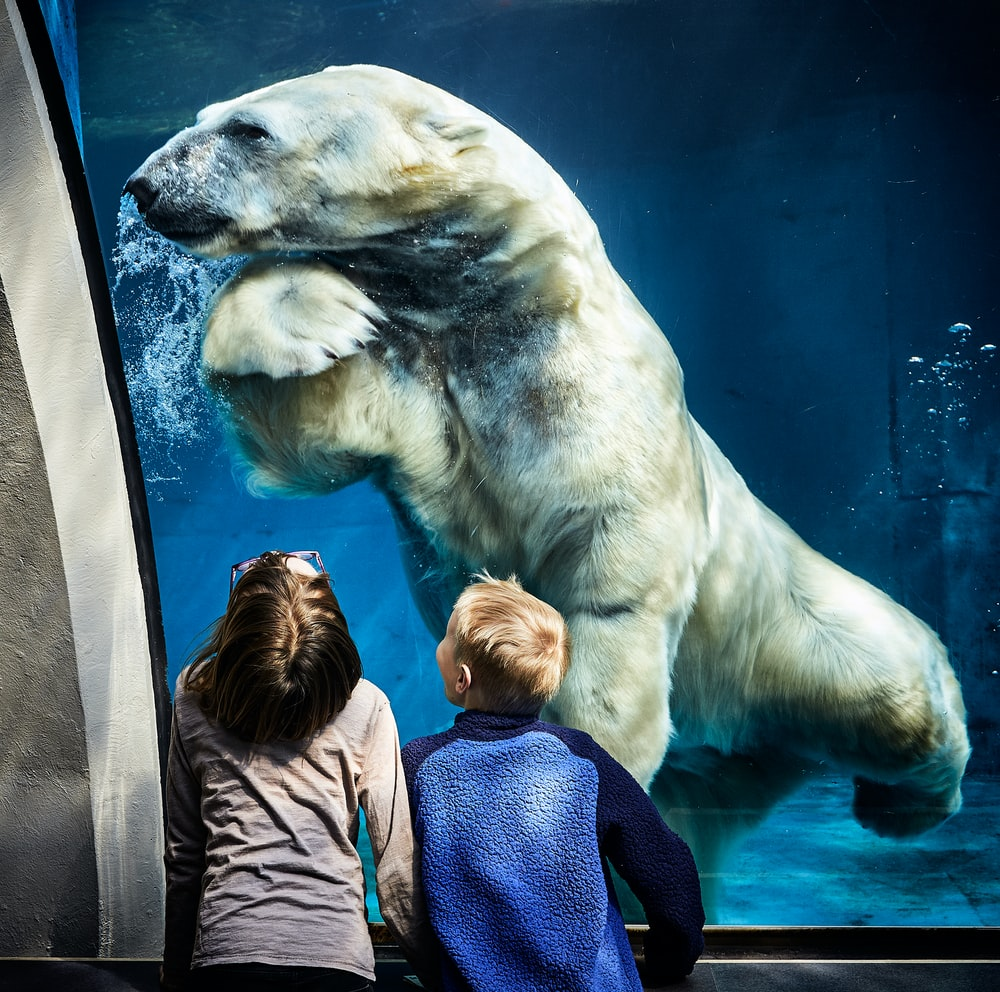 two boys watching on brown white polar bear