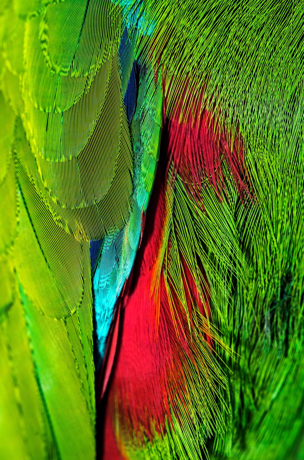 green and pink abstract painting