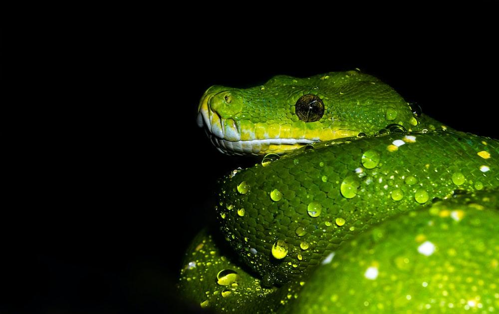 green snake during nighttime