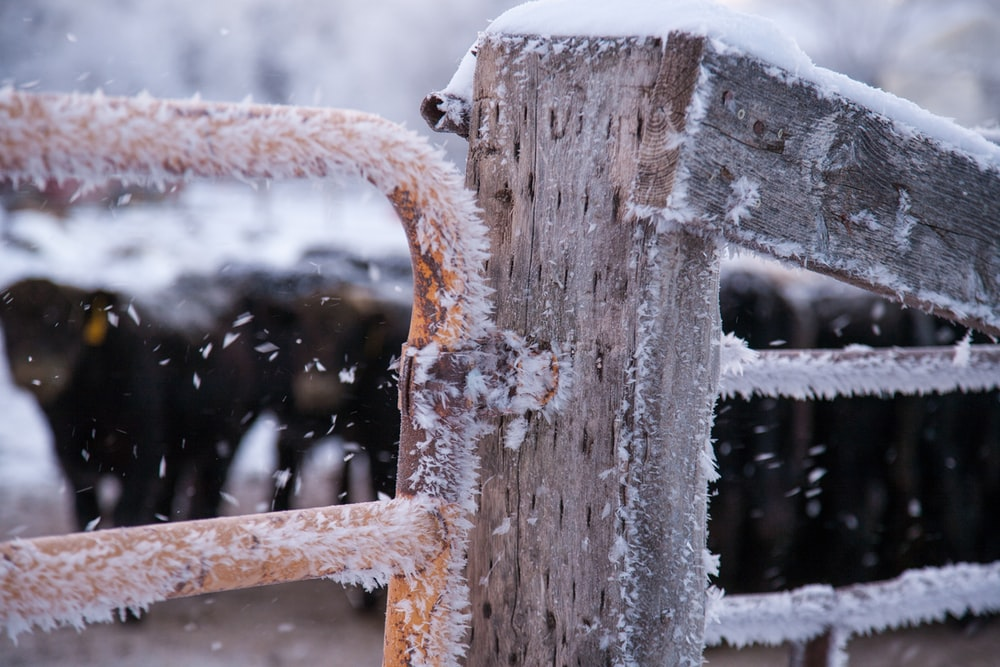 close-up photo of frozen fence