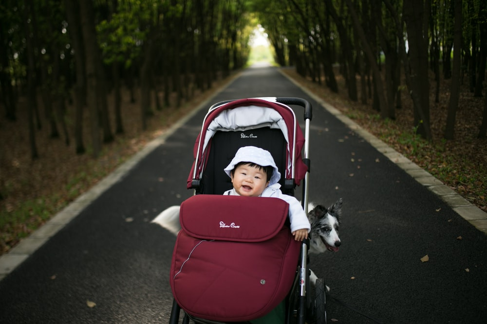 baby in stroller with dog at the back parked in the middle of road