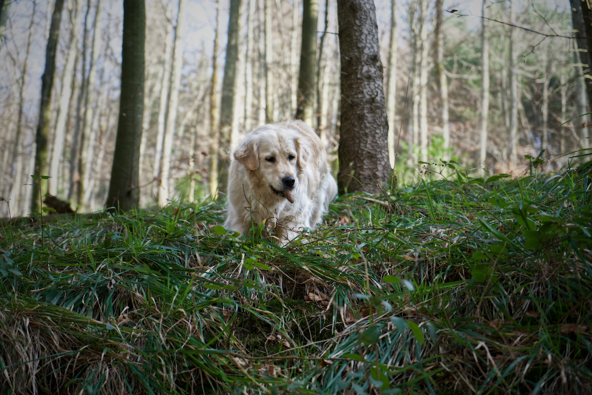 Perchè il cane marca il territorio?