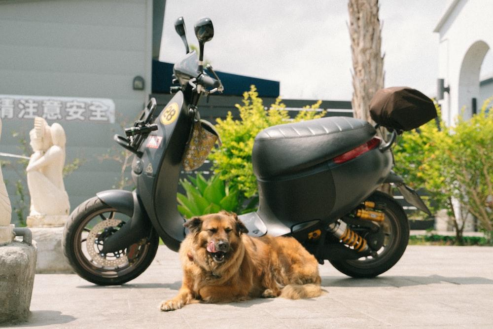 dog lying beside motor scooter