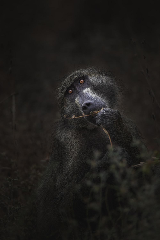 grayscale photography of monkey