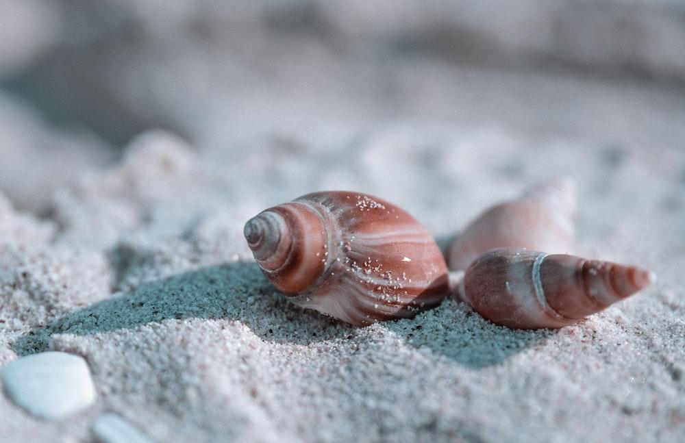 brown seashells on sand