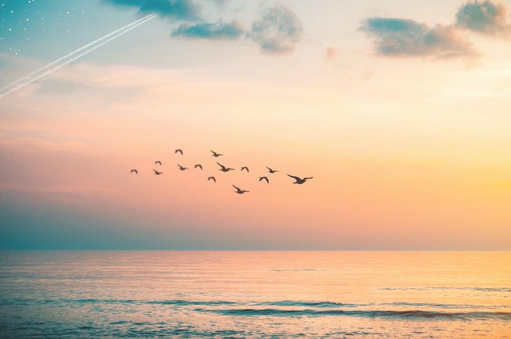 flock of birds flying above wavy body of water during golden hour