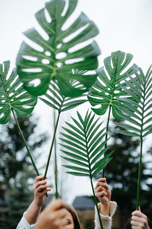 swiss plant