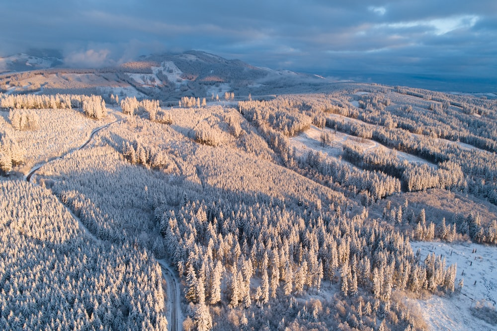 aerial photography of pine trees with snow