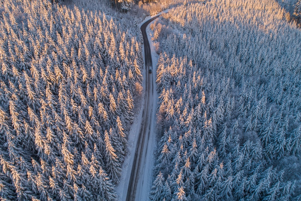 aerial photo of concrete road surrounded by pine trees