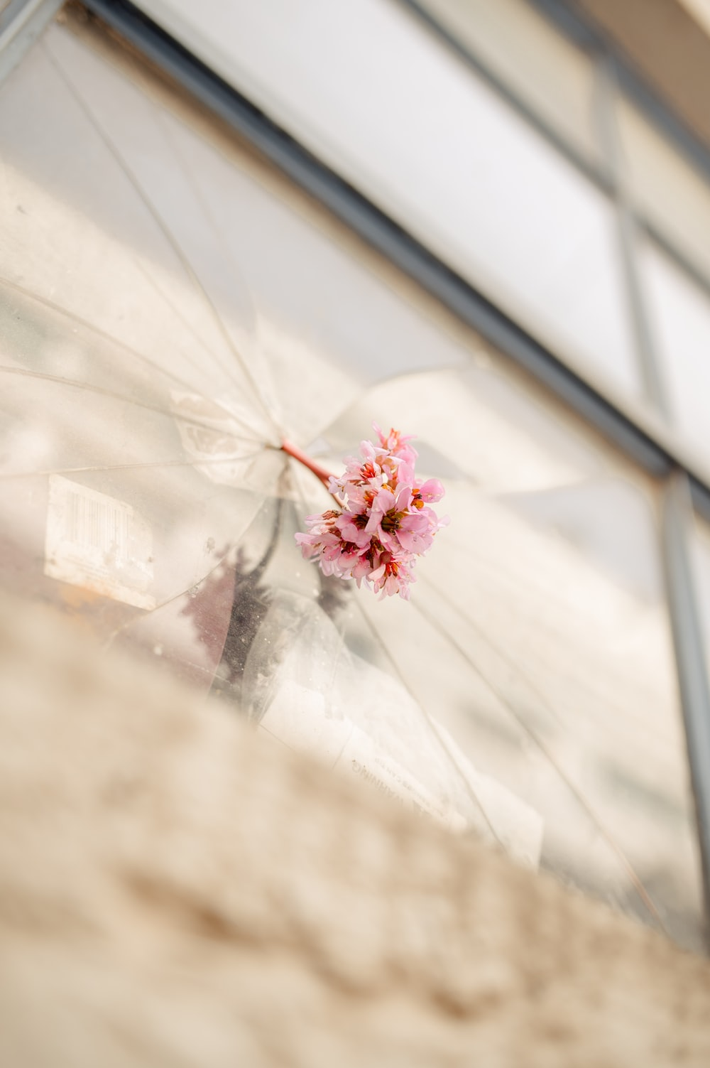 pink petaled flower on glass surface