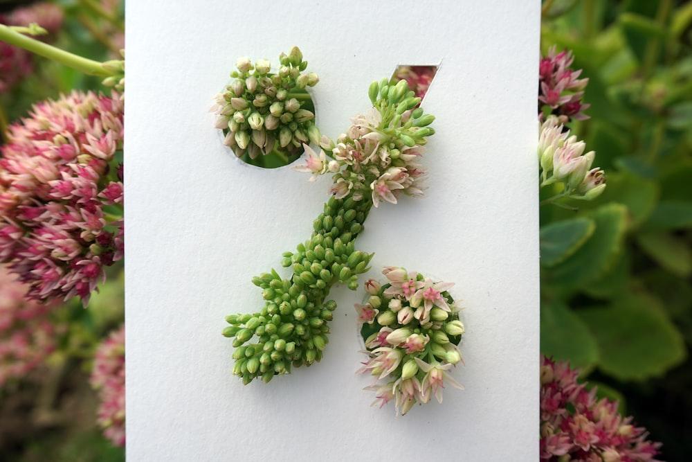 green flower buds