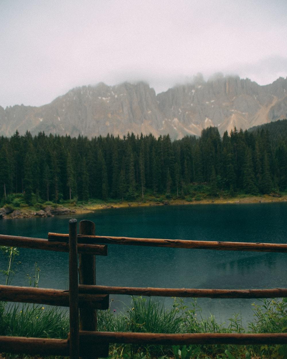 green pine trees near lake