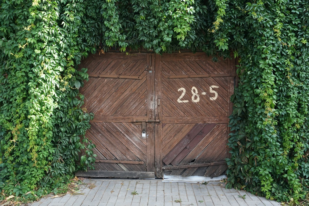 closed wooden gate surrounded with vines