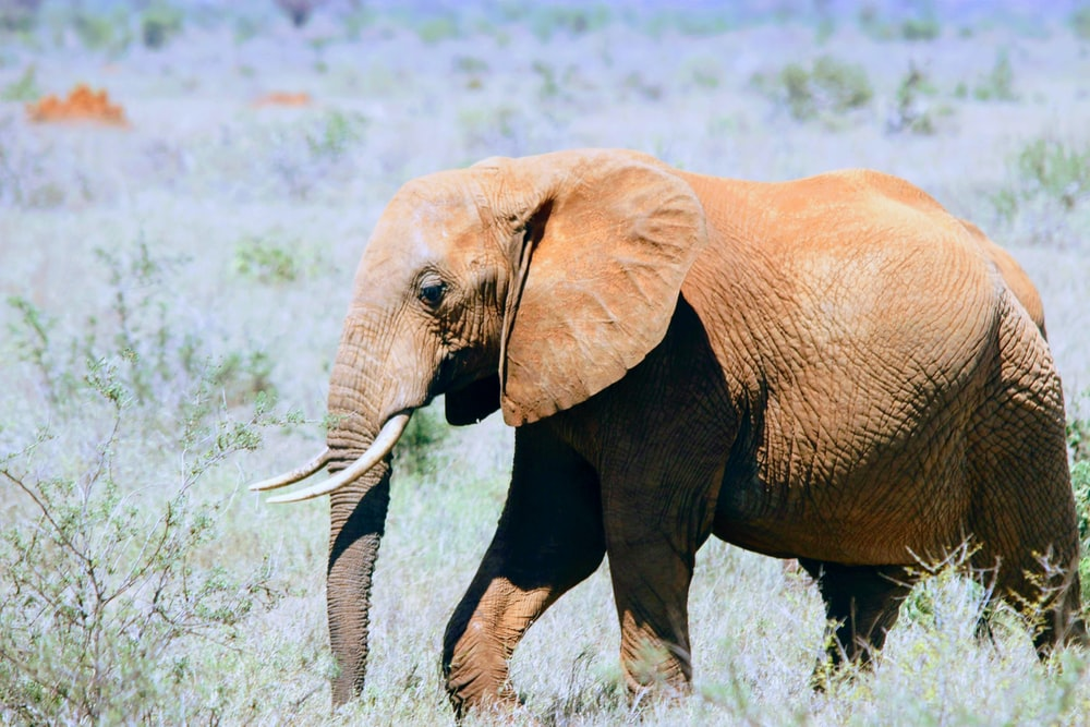 shallow focus photo of brown elephant