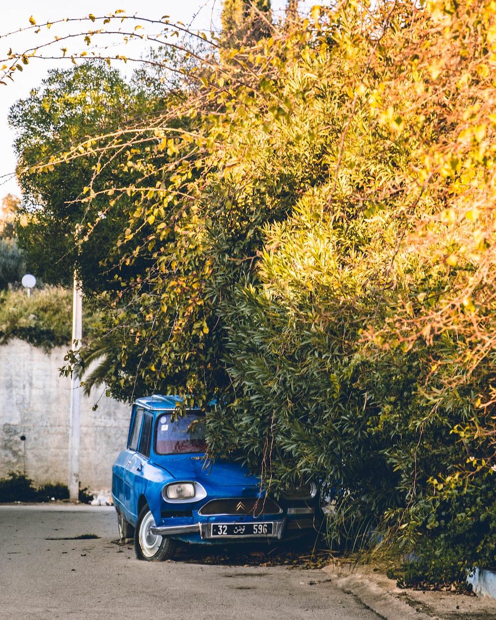 blue vehicle under vine plant